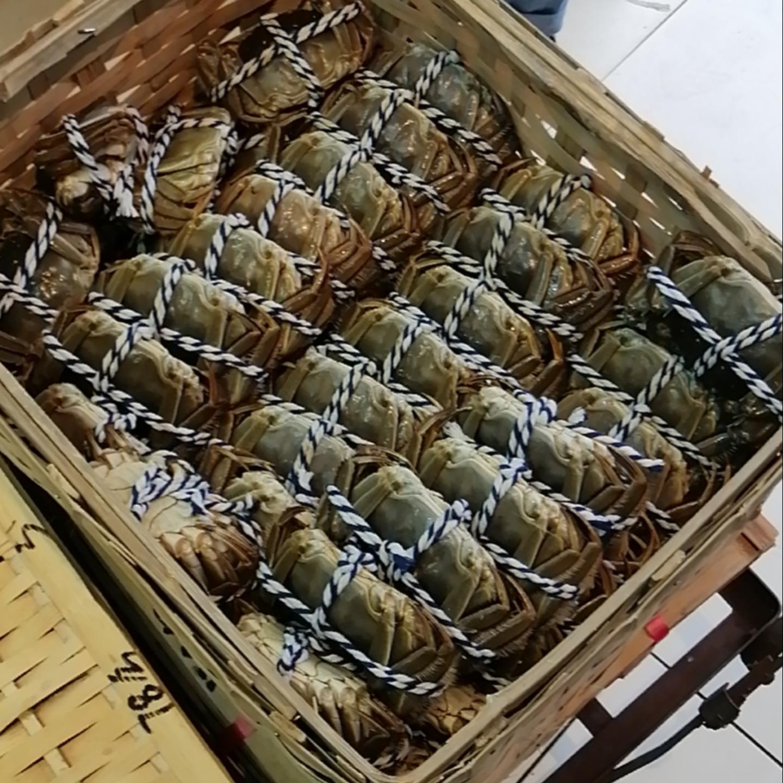 籮裝批發 大閘蟹  公蟹 6-6.6両 20只  -- (活鲜)