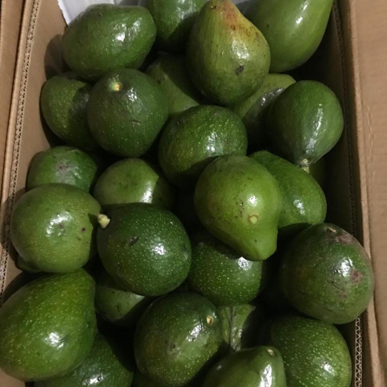 AVOCADO - Butter Fruit - Organically Grown - 1 Kg
