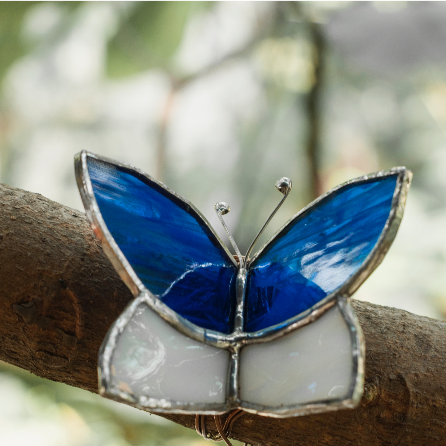 Blue Butterfly Wrap Sun-Catcher