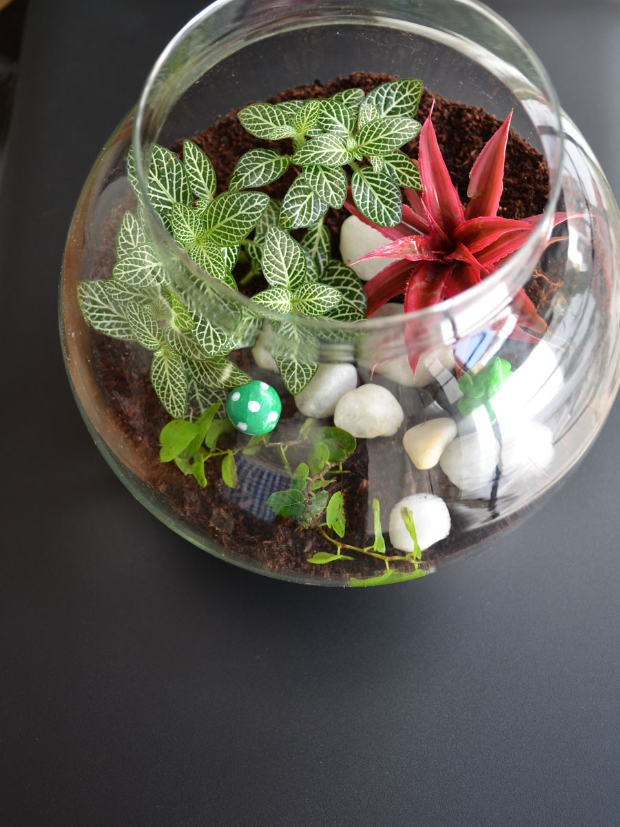 Round Terrarium (8 Inches)  (only Bangalore delivery)