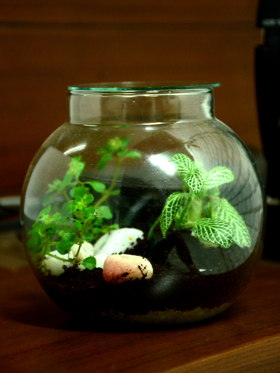 Round Terrarium (4 Inches)  (only Bangalore delivery)