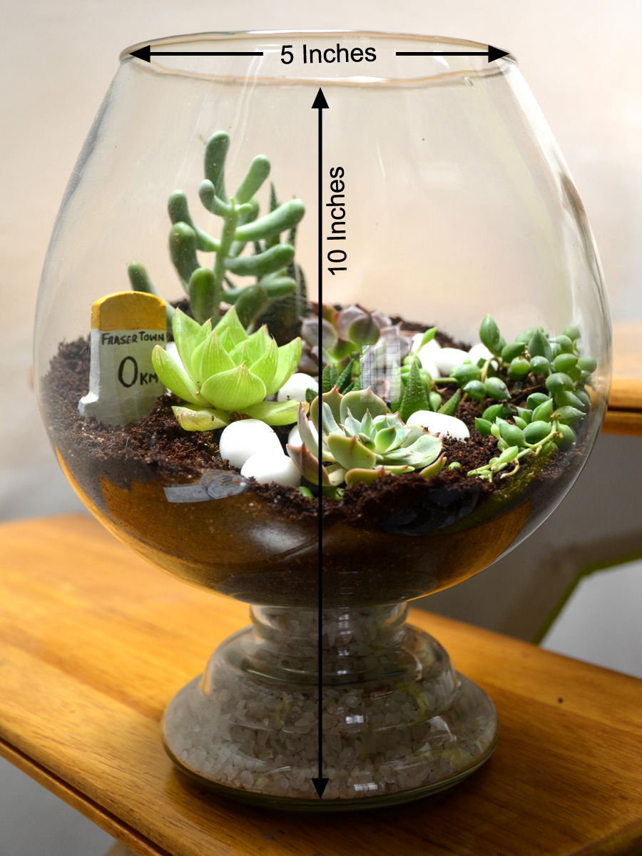 Wine Goblet Terrarium (8 Inches)   (only Bangalore delivery)