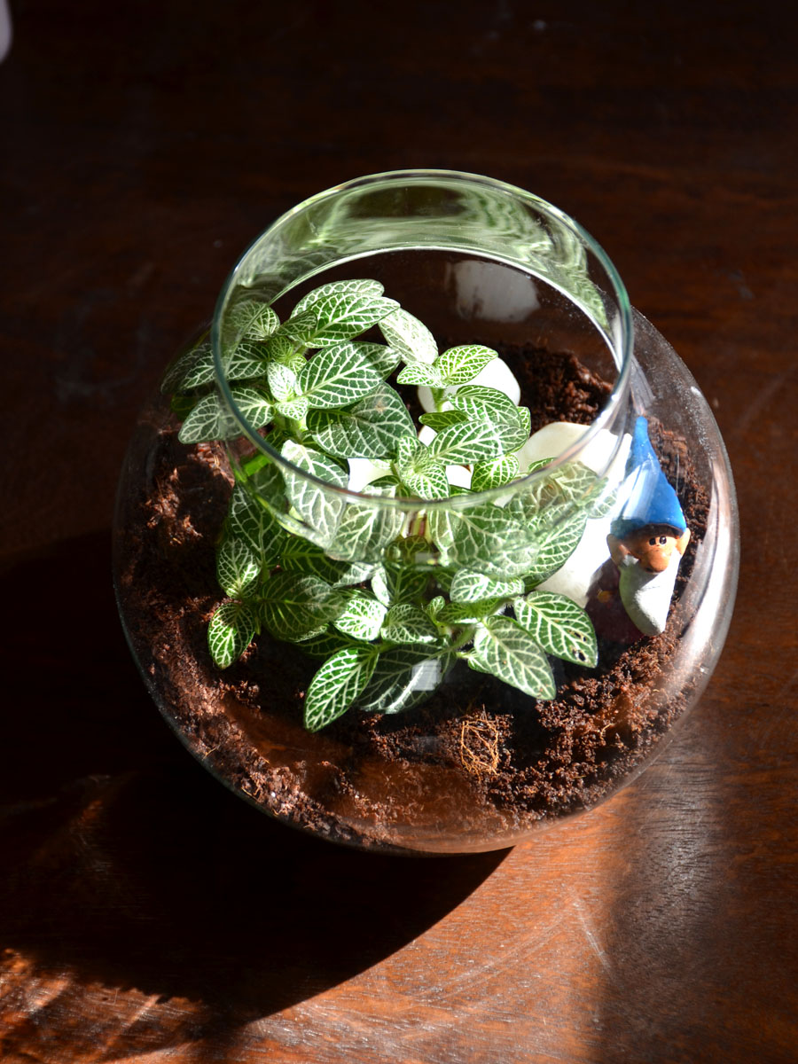 Round Terrarium (6 Inches)   (only Bangalore delivery)