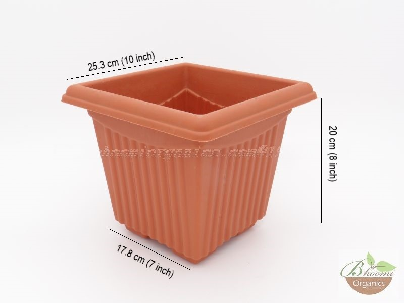 Square Terracotta Plastic pot (10 inch)