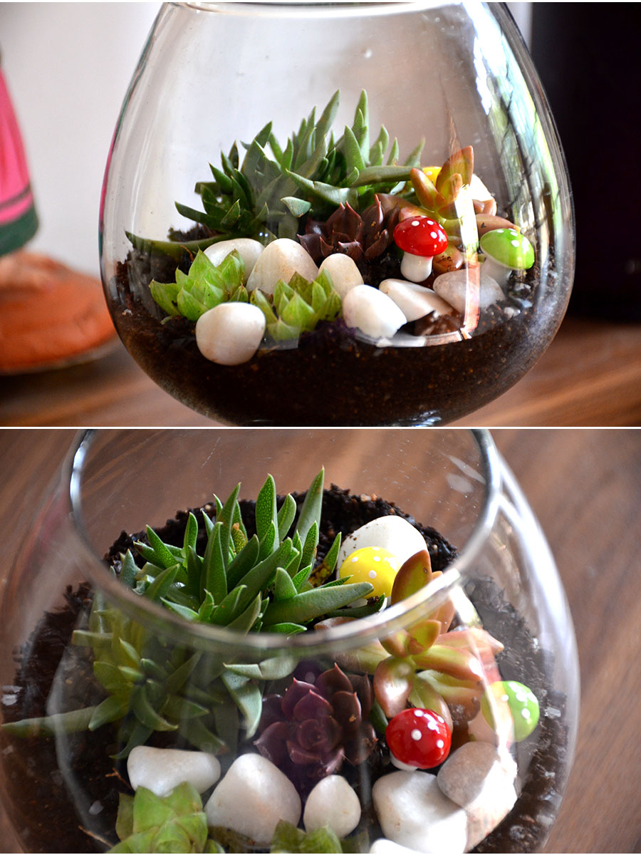 Wine Goblet Terrarium (6 Inches)   (only Bangalore delivery)