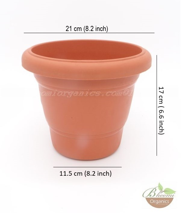 Regular Terracotta plastic pot (8 inch)