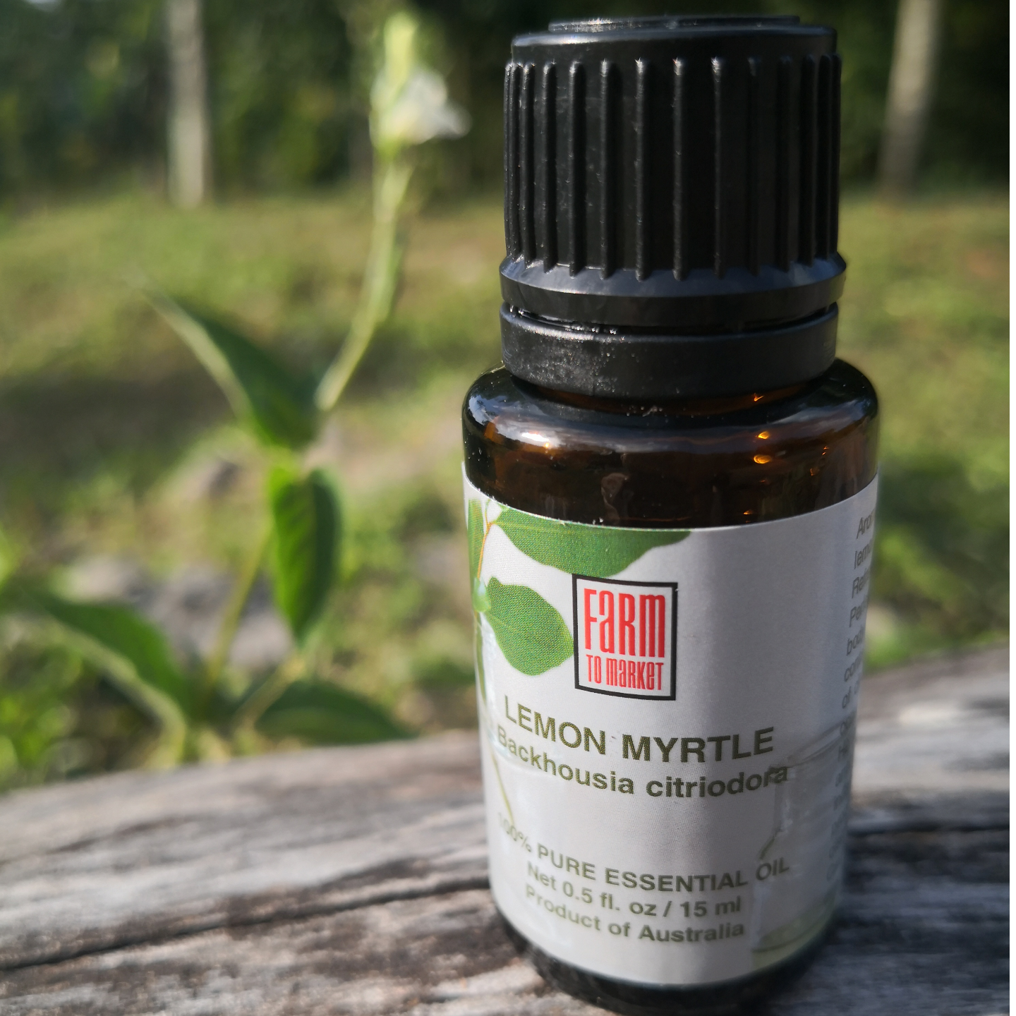 Lemon Myrtle Essential Oil 100 Pure
