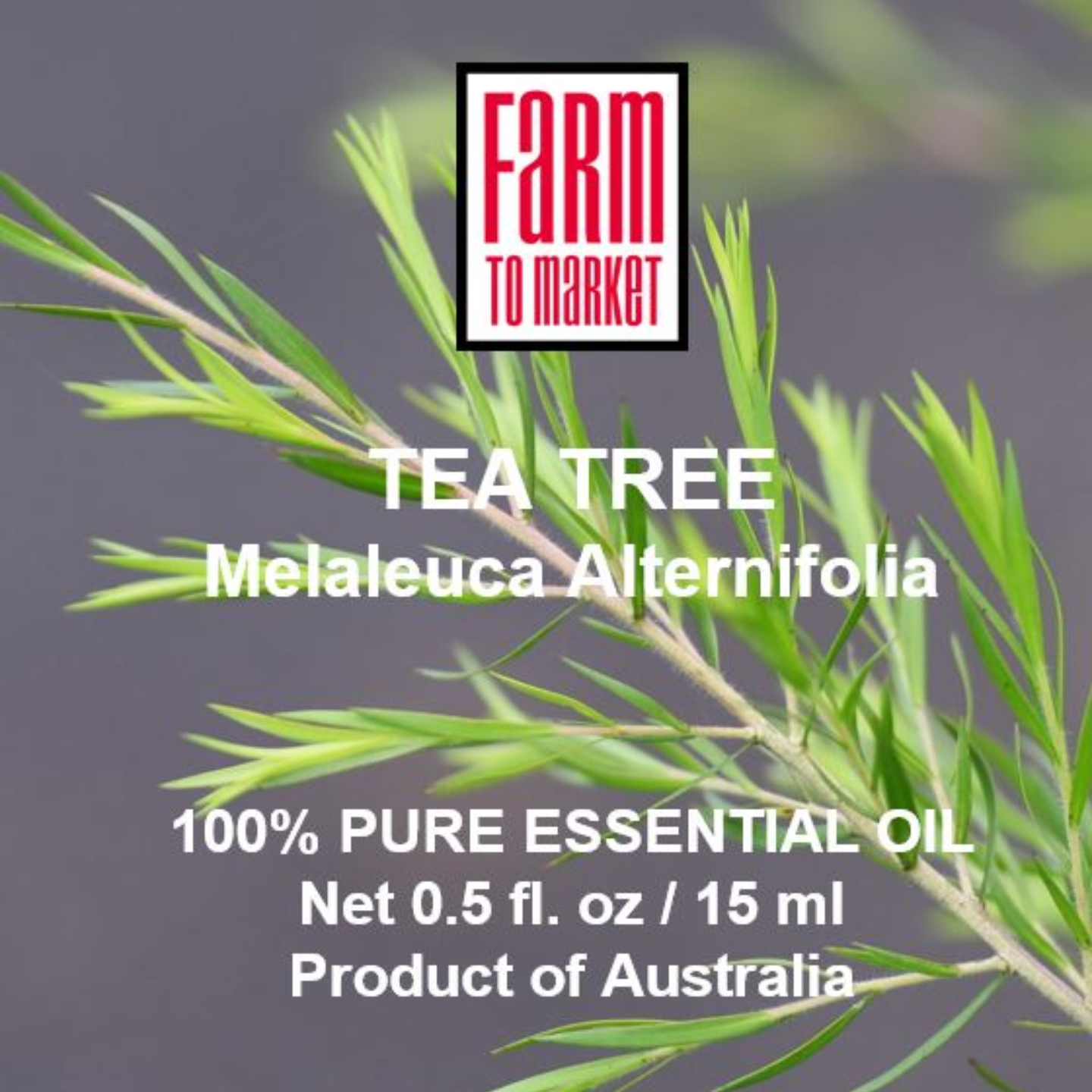 Tea Tree 100 Pure Essential Oil - 100 Pure