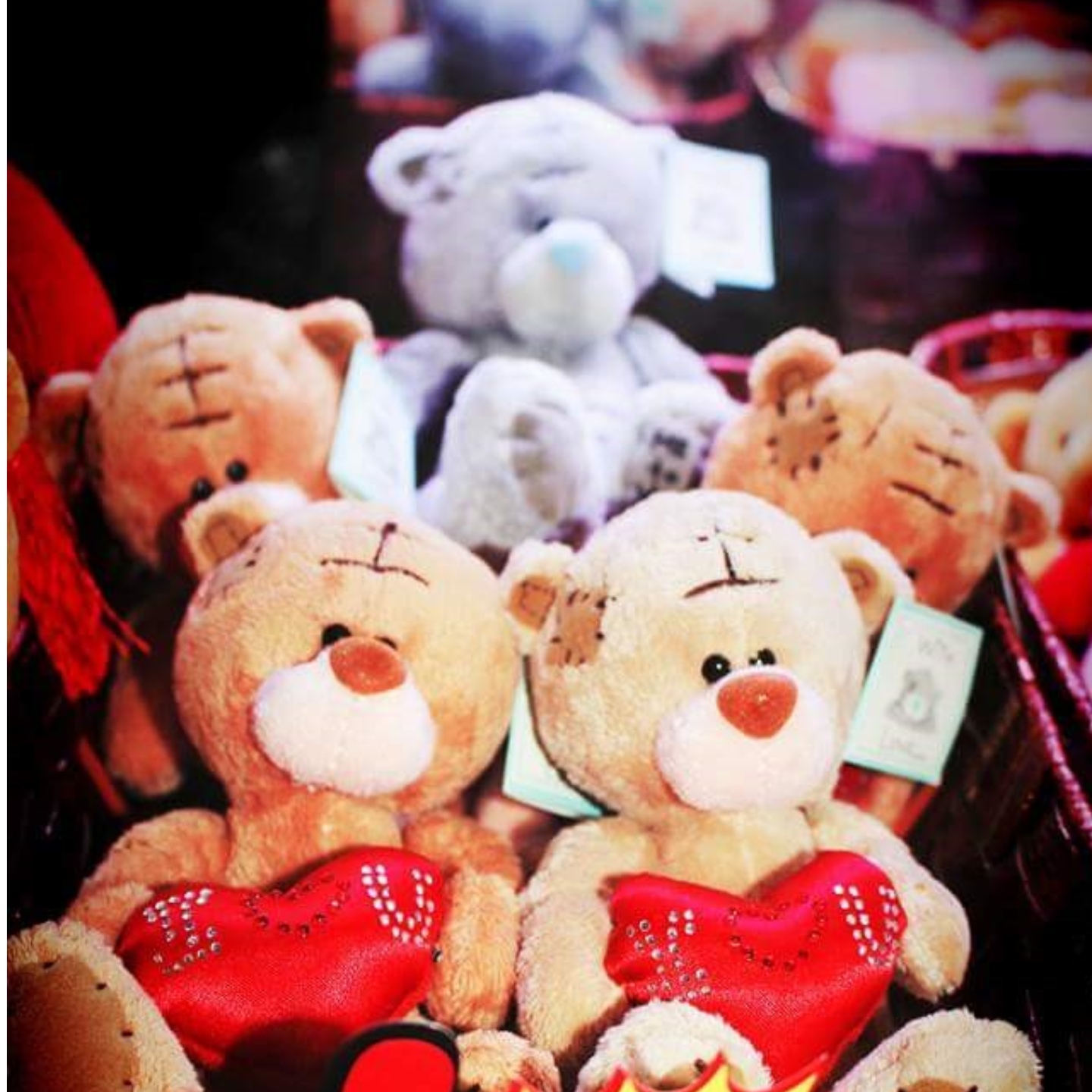 Teddy with Love