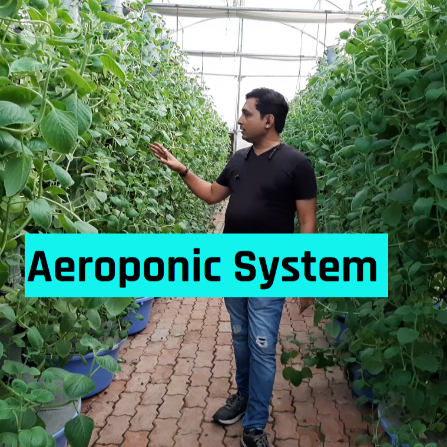 Hydroponic Consulting Services  Less than 2000 sq.mtr
